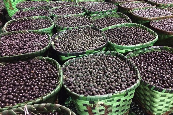 Acai berries are ready for shipment.