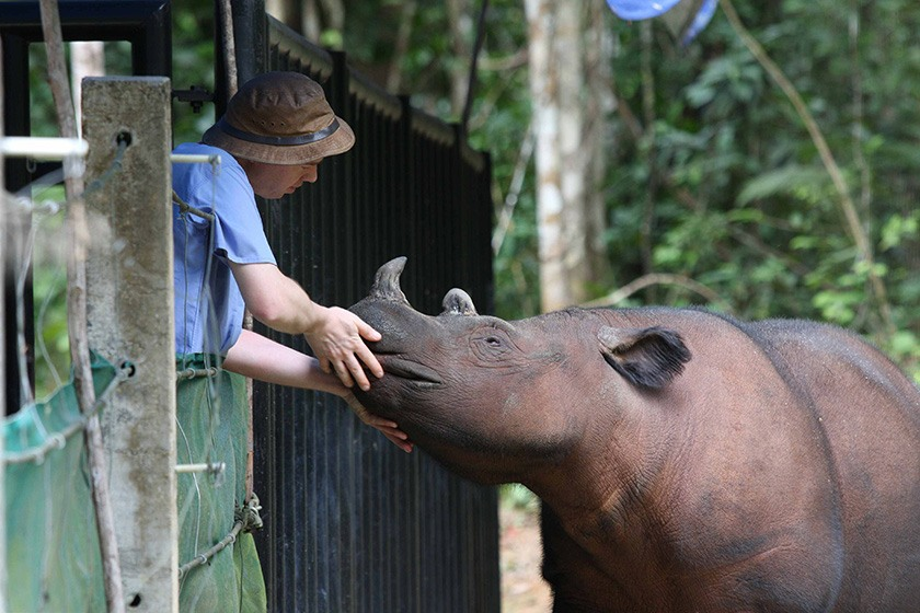 A young rhinoceros receives care from a wildlife veterinarian.