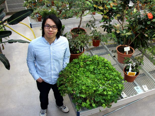 Jeffrey Yen, Class of 2018, in the Liberty Hyde Bailey Conservatory standing next to his favorite plant, a water fern.
