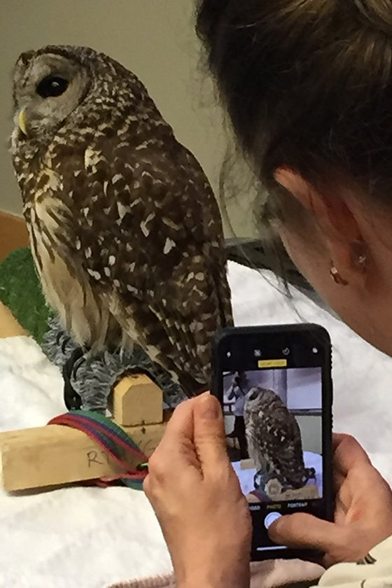 A woman takes a photo of an owl with her phone.