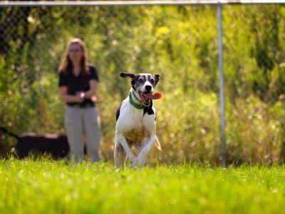 Dog running across a field